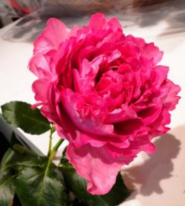 Грасская роза в духах