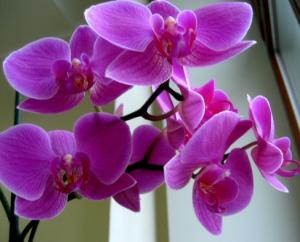 Орхидея в духах L'AMBRE