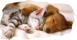 Спи сладко сладким сном.Спать необходимо!