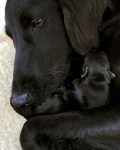 Вечная жизнь.Собака успевает оставить потомство.Животные не созданы для вечной жизни