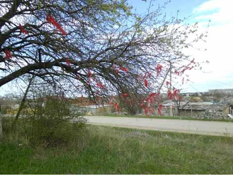 На дереве ленточки красные говорят, что о погибшем помнят