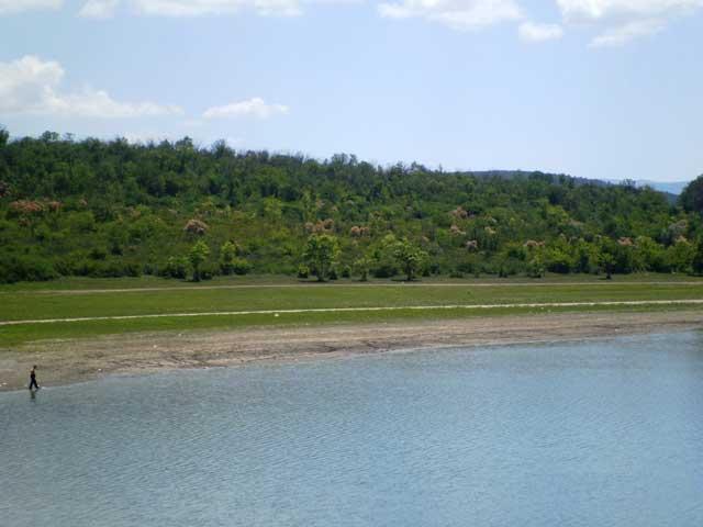 Воохранилище и рядом лесок с розовыми кустами