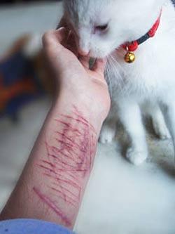 Раны-от-порезов. Почему они это делают?