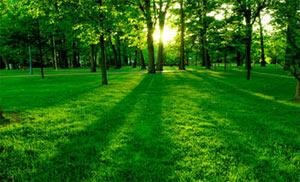 Гамма-цветов.Зеленый успокаивает.